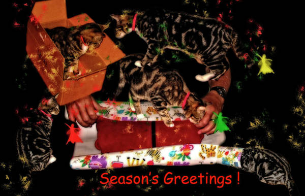 Photograph - Cats Seasons Greetings Card by Kay Brewer