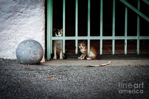 Photograph - Cats Who Watch by Bruno Spagnolo
