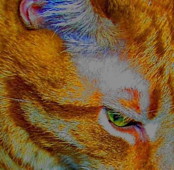 Wall Art - Photograph - Catscape by Valia Bradshaw