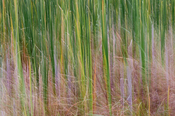 Photograph - Cattail Abstract #1 by Patti Deters
