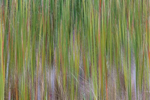 Photograph - Cattail Abstract #2 by Patti Deters