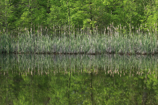 Wall Art - Photograph - Cattail Reflection by Dan Sproul