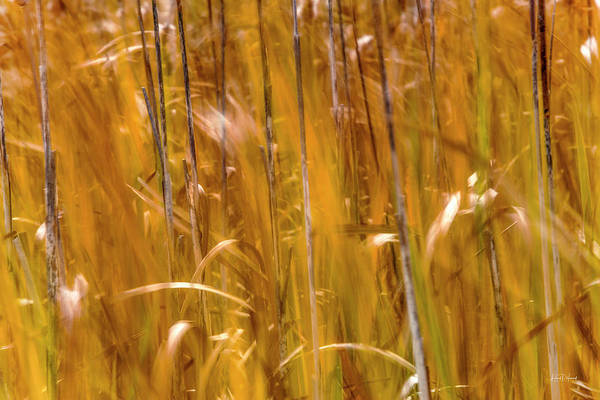 Photograph - Cattail Wind by Leland D Howard