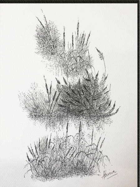 Weeds Drawing - Cattails by Ashima Kaushik