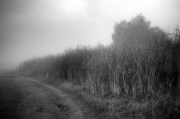 Photograph - Cattails In The Fog by Michael Colgate