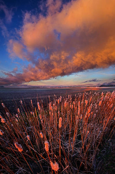 Cattails Wall Art - Photograph - Cattails In The Wind by Phil Koch