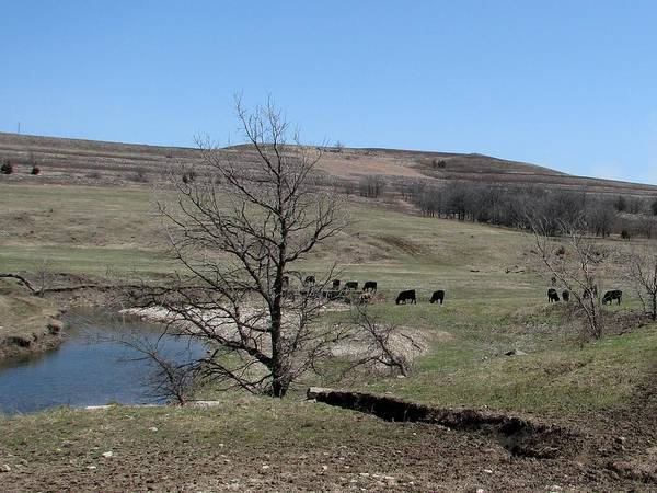 Photograph - Cattle Along Deep Creek by Keith Stokes