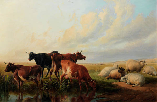 Breeding Painting - Cattle And Sheep Resting by Thomas Sidney Cooper