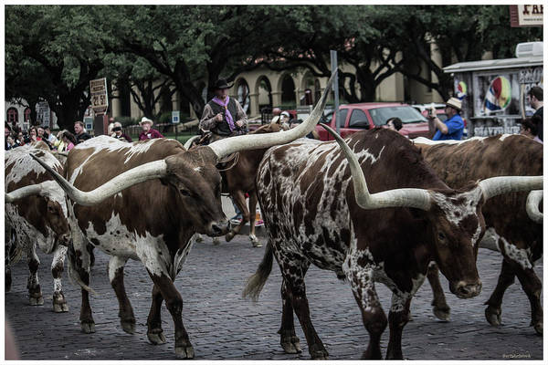 Photograph - Cattle Drive 24 by Roberta Byram