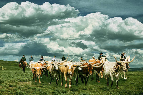 Wall Art - Painting - Cattle Drive by Jack Zulli