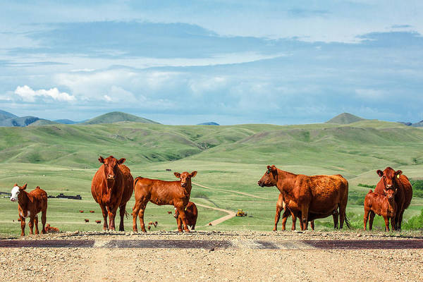 Photograph - Cattle Guards by Todd Klassy