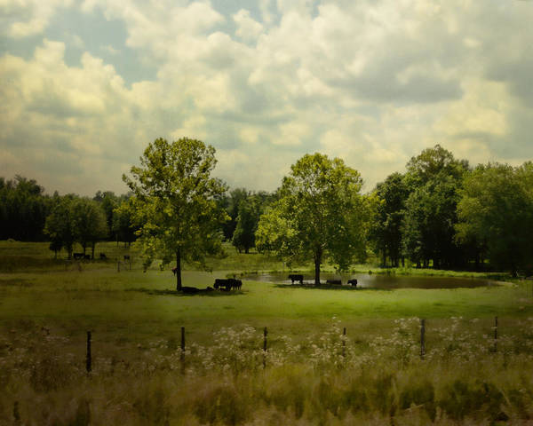 Photograph - Cattle Pond In Summer by Jai Johnson