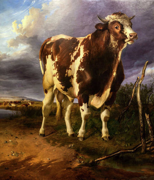Breeding Painting - Cattle by Thomas Sidney Cooper