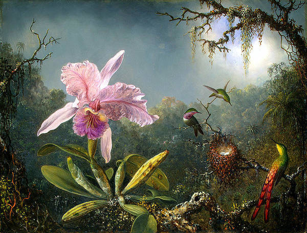 Painting - Cattleya Orchid And Three Brazilian Hummingbirds 1871 by Joy of Life Gallery - Martin Johnson Heade