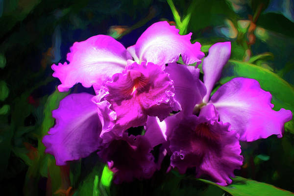 Photograph - Cattleya Orchid by Carlos Diaz