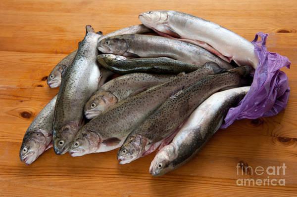 Wall Art - Photograph - Caught Fresh Trouts Fish Carcass by Arletta Cwalina
