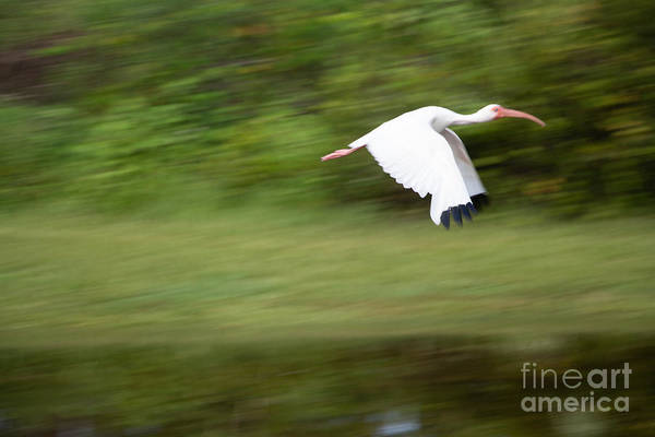 Wall Art - Photograph - Caught In Flite by Michael Rados