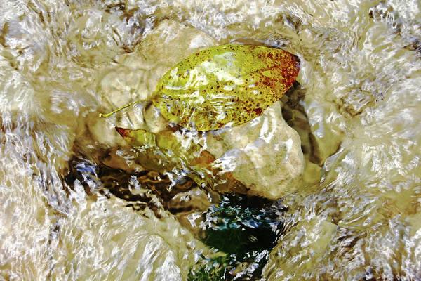 Puerto Plata Photograph - Caught On Rocks Damajagua River by Debbie Oppermann