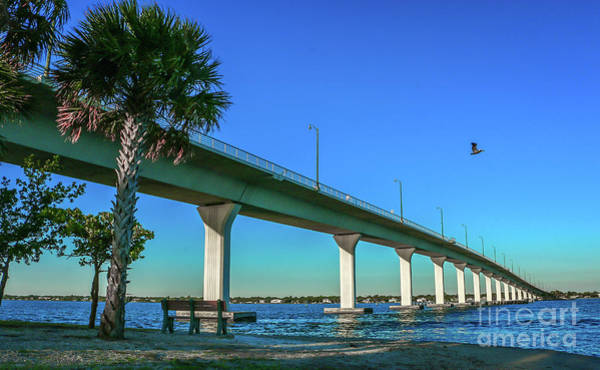 Photograph - Causeway Pelican by Tom Claud