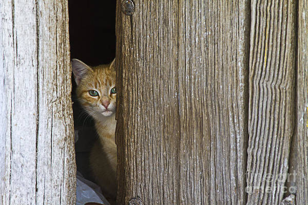 Photograph - Cautious Kitty by Heiko Koehrer-Wagner