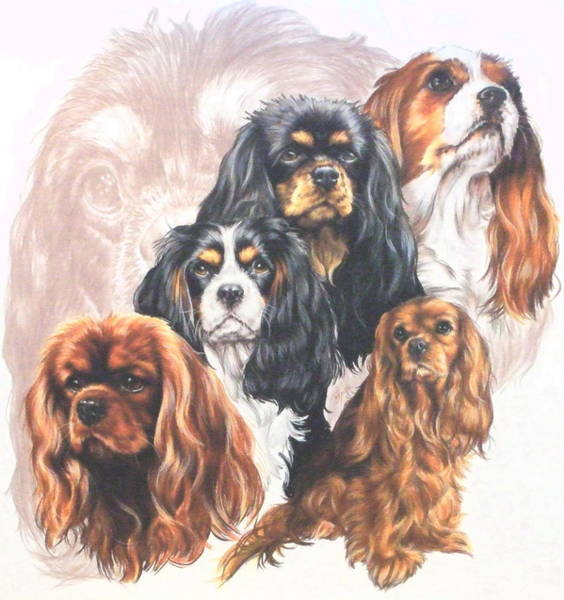 Wall Art - Mixed Media - Cavalier King Charles Spaniel Grouping by Barbara Keith