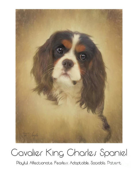 Digital Art - Cavalier King Charles Spaniel Poster by Tim Wemple