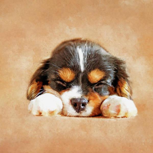 Blenheim Digital Art - Cavalier King Charles Spaniel Puppy by Creativemotions