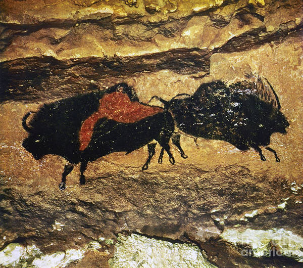 Artifacts Wall Art - Photograph - Cave Art: Bison by Granger