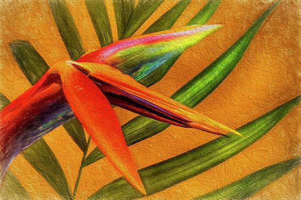 Photograph - Cave Dwelling Bird Of Paradise by Phyllis Meinke