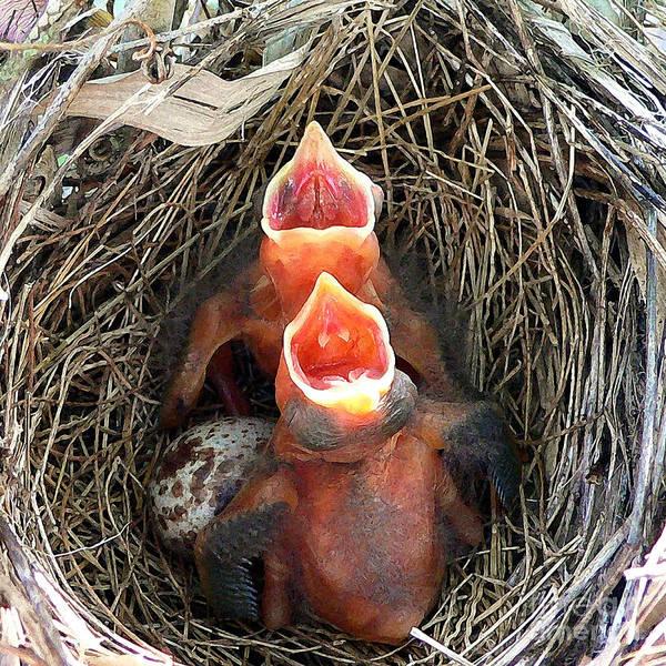 Sweet Bird Photograph - Cavernous Cardinals by Al Powell Photography USA