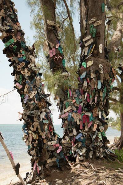 Photograph - Cayman Shoe Tree by Teresa Wilson