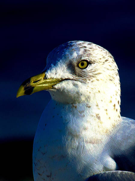 Photograph - Cedar Gull Iv by Jeff Kurtz