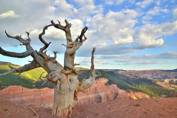 Photograph - Cedar Breaks Vista by Ray Mathis