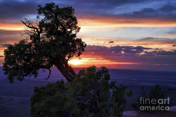 Photograph - Cedar Canyons by Jim Garrison