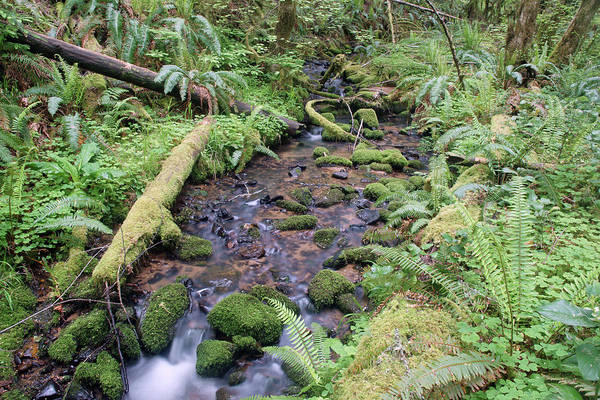 Photograph - Cedar Creek Near Cottage Grove Lake #1 by Ben Upham III