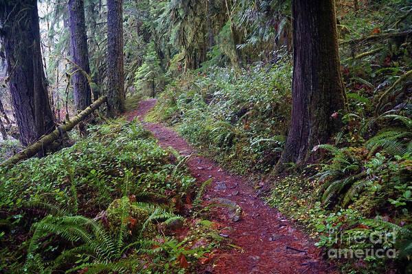 Photograph - Cedar Creek Trail #2 by Ben Upham III
