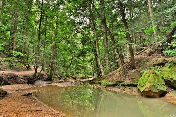 Photograph - Cedar Falls At Hocking Hill Hiking Trail by Lisa Wooten