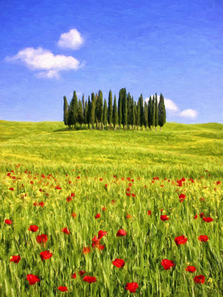 Painting - Cedar Grove And Tuscany Poppies by Dominic Piperata