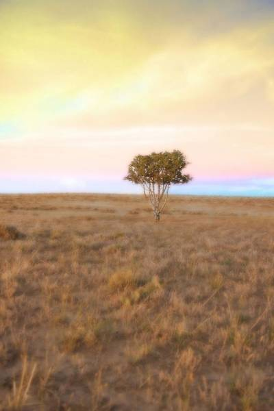 Photograph - Cedar Tree At Sunset by Amanda Smith