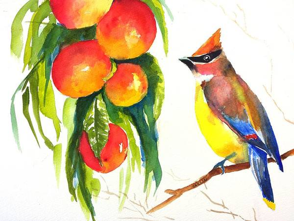 Wall Art - Painting - Cedar Waxwing And Elberta Peaches by Carlin Blahnik CarlinArtWatercolor