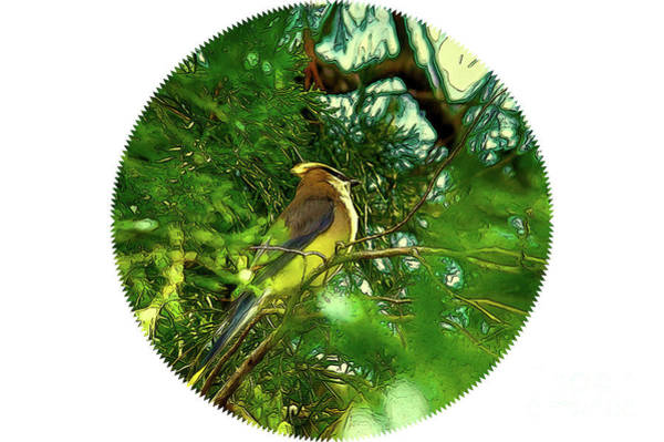 Digital Art - Cedar Waxwing Beauties 16 by Kim Pate