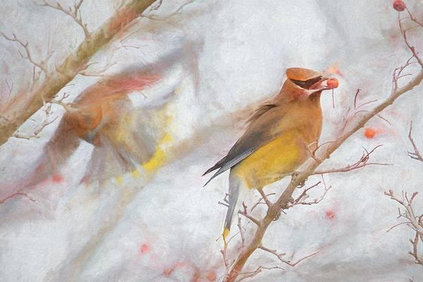 Waxwing Digital Art - Cedar Waxwings V by Glenn Woodell
