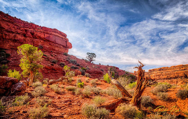 Photograph - Cedars And Sandstone by Rikk Flohr