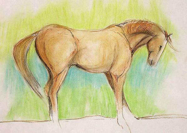Warmbloods Drawing - Cee Cee by Jennifer Fosgate