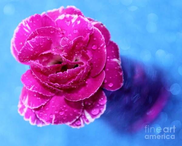 Carnation Photograph - Celebrate Love by Krissy Katsimbras