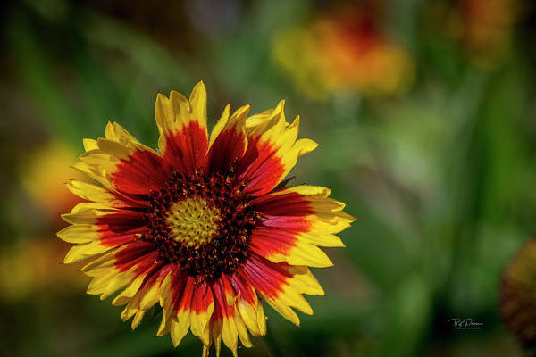 Photograph - Celebration Of Yellow And Red by Bill Posner