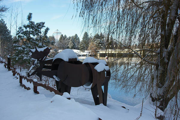 Wall Art - Photograph - Centennial Trail Moose by Daniel Hagerman