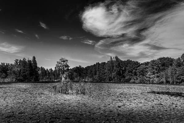 Cypress Gardens Photograph - Center Cypress - Bw by Marvin Spates
