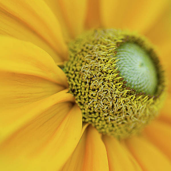 Photograph - Center Floral Beauty by Julie Palencia