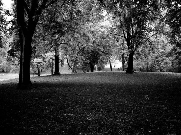 Photograph - Central Park Forest by M G Whittingham